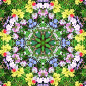 Wildflower Mandala