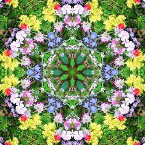 Wildflower Mandala